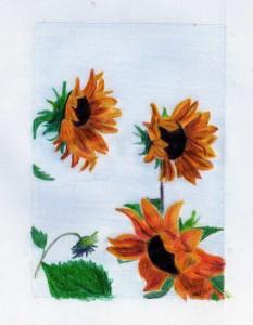 Słoneczniki (kredki ołówkowe,szkolne)