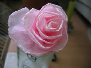 róża z krepy