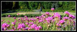 Kwiatki zapatrzone w taniec 14.05.2009r.