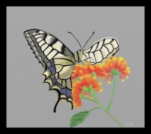 motyl (czerwiec 2009r.)