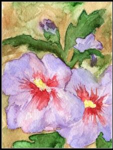 kwiaty za Słupi wakacje 2009r.