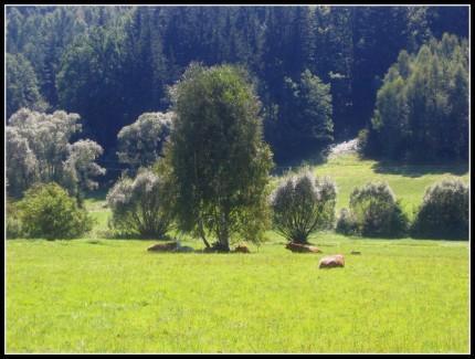 wakacje,góry 2009r. Rudawy Janowickie