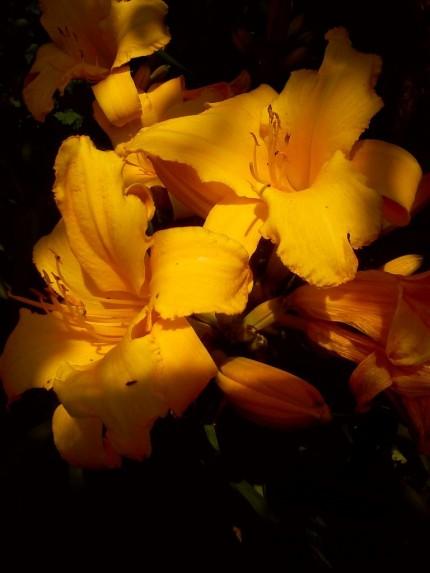 kwiaty lipiec 2013r.