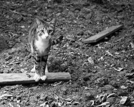 koty Chorwacja 2013r.