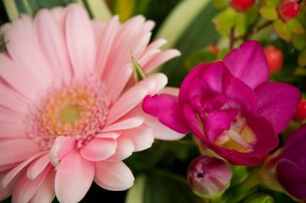 kwiaty 2013r.