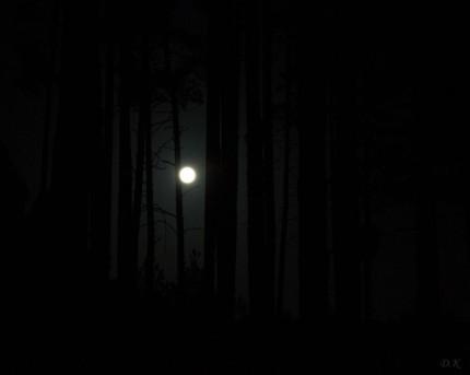 Noc,puszcza 2014r.